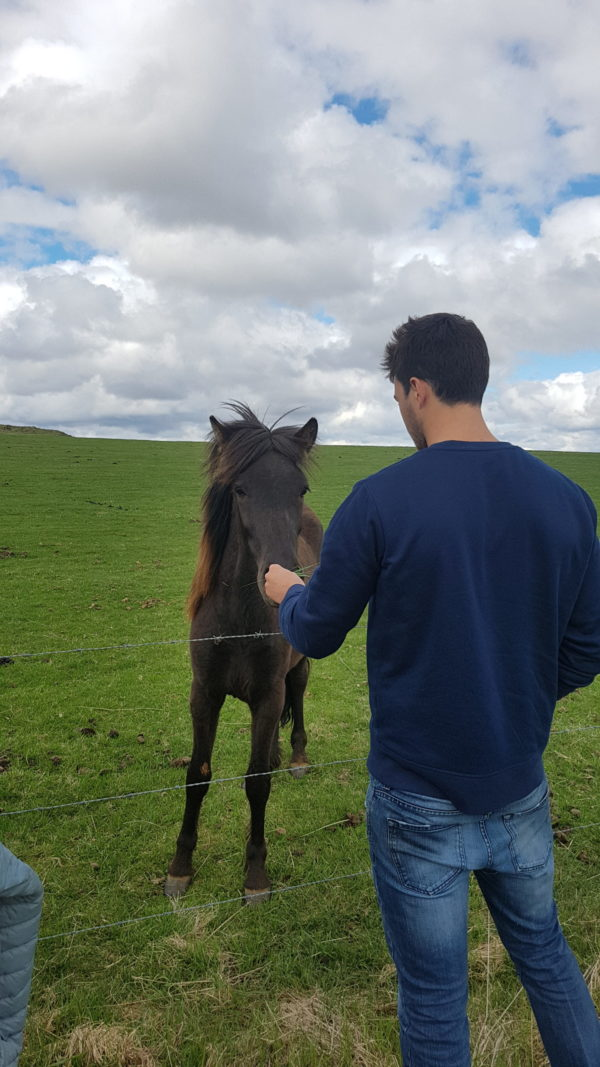 Meet the local horse on the Golden Circle with the local day tour