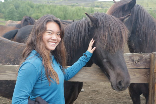 Students on study abroad in Iceland meeting the Icelandic horse in Iceland