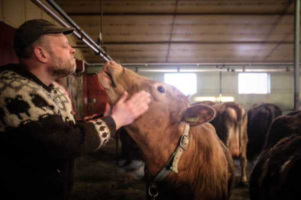 Students on study abroad in Iceland visiting a local farmer in Iceland