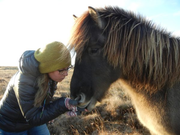 Students on study abroad in Iceland meeting an icelandic horse in Iceland
