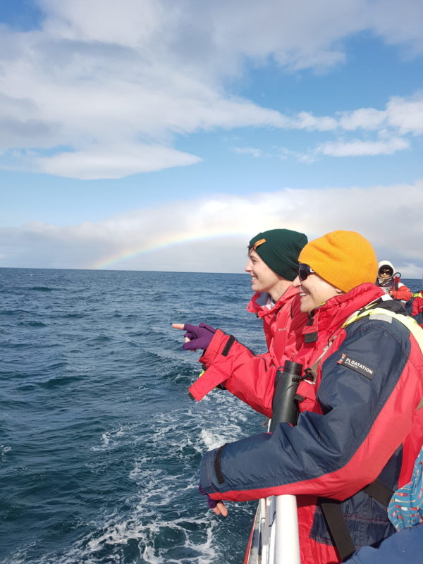Whale watching on all womens tour and solo female travel in Iceland